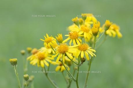 bloomの写真素材 [FYI00673782]