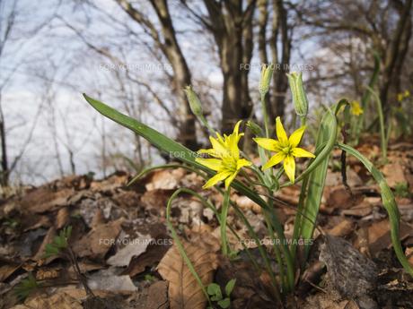 yellow flower on brownの素材 [FYI00674089]