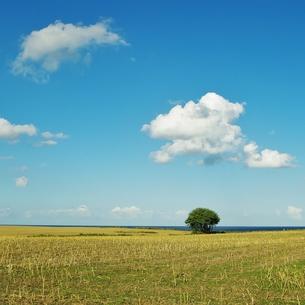 landscape in sch?nhagen,schleswig holsteinの写真素材 [FYI00674096]