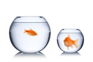 fish social envy conceptの写真素材 [FYI00674471]
