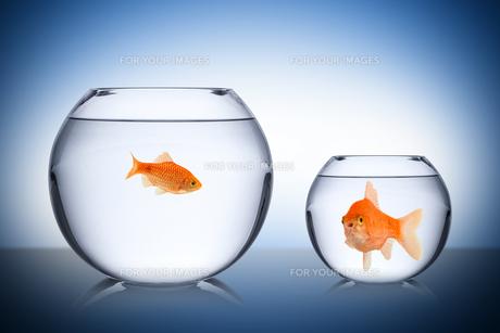 fish social envy conceptの素材 [FYI00674472]
