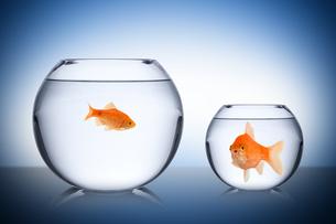 fish social envy conceptの写真素材 [FYI00674472]