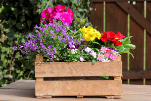 crate with spring flowersの写真素材 [FYI00674769]