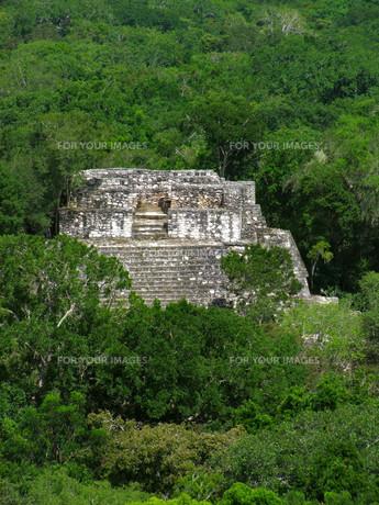 temple at calakmulの写真素材 [FYI00675080]
