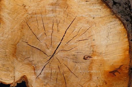 tree trunkの素材 [FYI00675094]