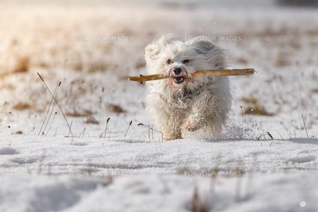 dog with stickの素材 [FYI00675134]