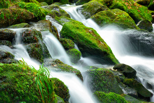 mountain stream with mossy stonesの写真素材 [FYI00675154]