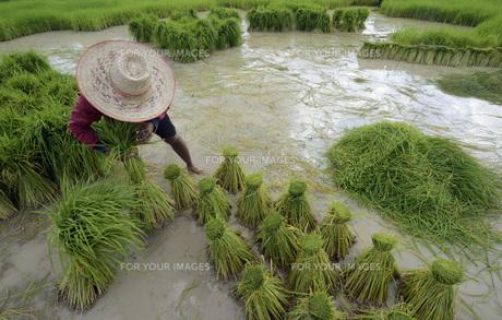 thailandの素材 [FYI00675195]