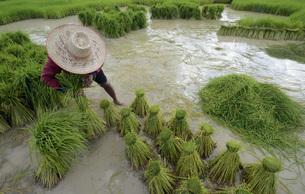 thailandの写真素材 [FYI00675195]