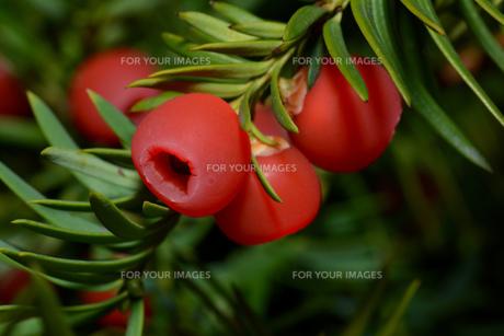 plants_flowersの素材 [FYI00675196]
