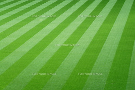 football field with green grassの写真素材 [FYI00675256]