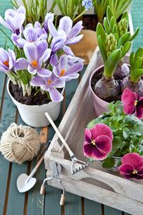 various spring flowersの素材 [FYI00675560]