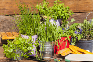 herbs in pots in front of a garden shedの写真素材 [FYI00675725]