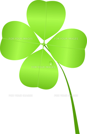 four-leaf clover for st. patrick's day isolatedの写真素材 [FYI00675754]