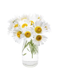 plants_flowersの写真素材 [FYI00675930]