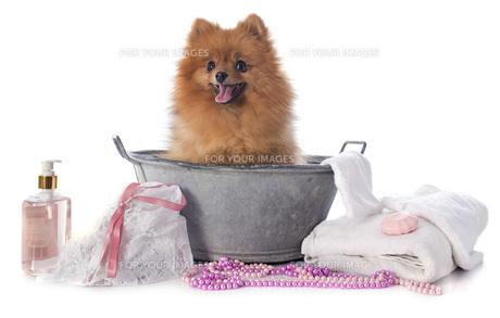 home_animalsの写真素材 [FYI00675960]