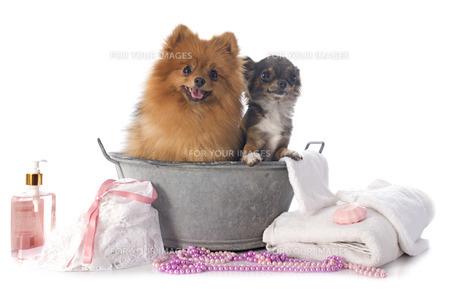 home_animalsの写真素材 [FYI00675963]