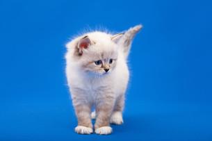 cat babyの写真素材 [FYI00676089]