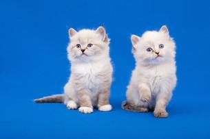 cat babyの写真素材 [FYI00676090]