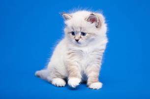 cat babyの写真素材 [FYI00676093]