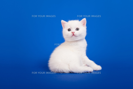 home_animalsの素材 [FYI00676100]