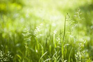 plants_flowersの写真素材 [FYI00676257]