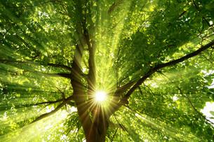 sun shines through the explosive treeの写真素材 [FYI00677449]