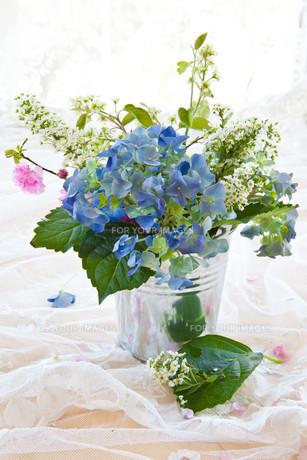 plants_flowersの素材 [FYI00677745]