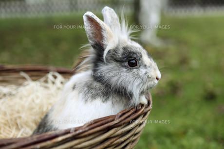 home_animalsの写真素材 [FYI00678603]