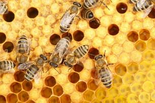 working beeの写真素材 [FYI00678690]