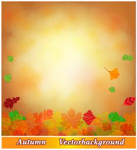 falling autumn leavesの写真素材 [FYI00679070]
