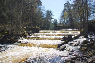 wild salmon stair swedenの写真素材 [FYI00679498]