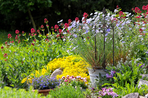 colourful blooms in the gardenの写真素材 [FYI00679616]