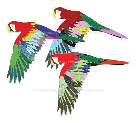 birdsの写真素材 [FYI00680018]