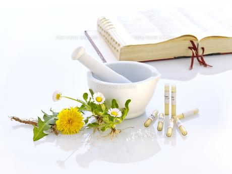 mortar dandelion daisy nature medicineの写真素材 [FYI00680047]