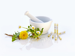 mortar daisy dandelion nature medicineの写真素材 [FYI00680052]