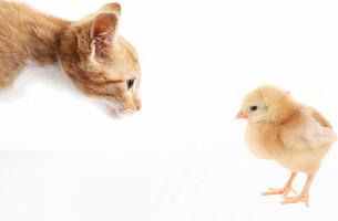 home_animalsの素材 [FYI00680192]