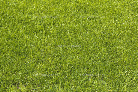 lawn as backgroundの写真素材 [FYI00680268]