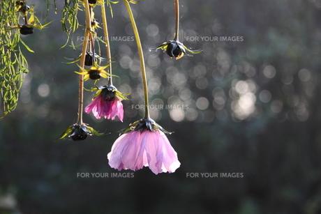 plants_flowersの写真素材 [FYI00680428]