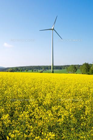 wind turbine behind a field of rapeの写真素材 [FYI00680712]