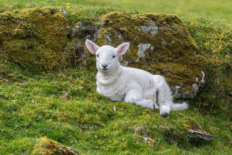 useful_animalsの写真素材 [FYI00680871]