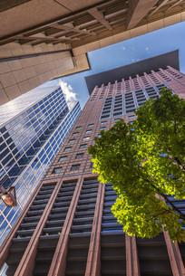 skyscraper and treeの写真素材 [FYI00680907]