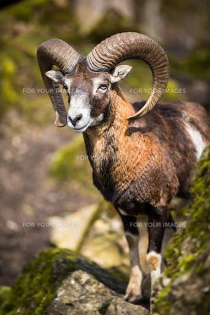 mammalsの写真素材 [FYI00681043]