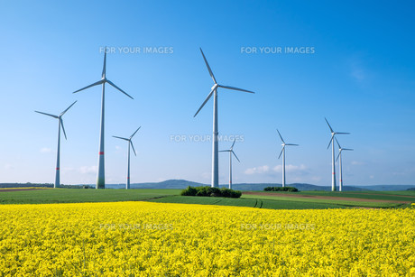 rapeseed field and wind turbines in germanyの素材 [FYI00681409]