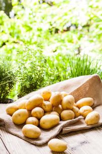 fresh new potatoes on a hessian sackの写真素材 [FYI00681702]