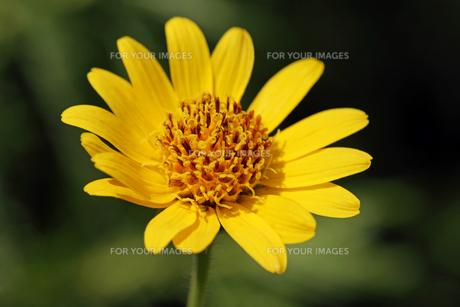 plants_flowersの素材 [FYI00682242]