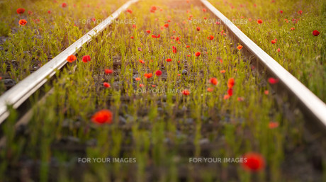 poppy railsの写真素材 [FYI00682277]