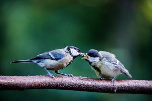 feeding timeの写真素材 [FYI00682401]