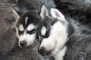 home_animalsの写真素材 [FYI00683264]