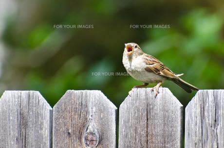 birdsの写真素材 [FYI00683318]
